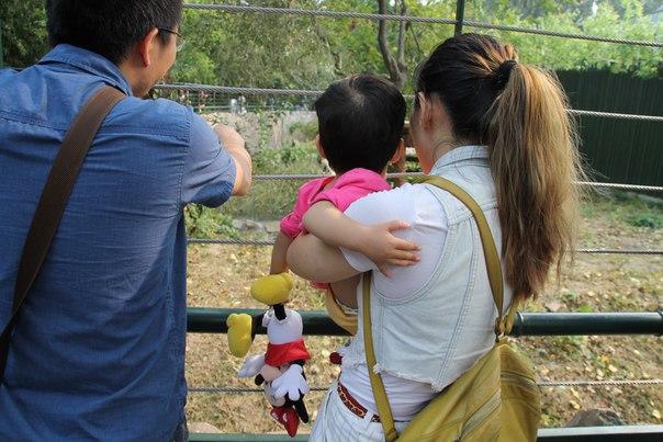 Китай. Пекин. В зоопарке экскурсия