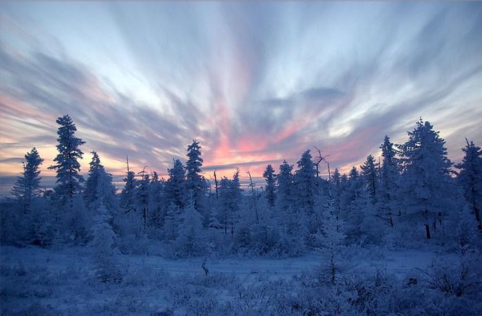 taiga rusa siberia frio nieve hielo