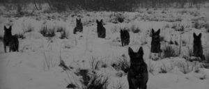собаки псы идут по снегу